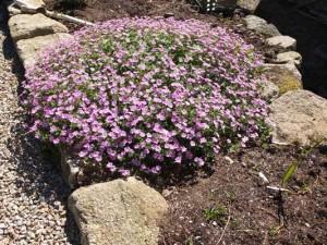 geranium-mavis-simpson